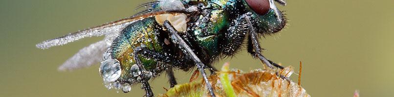 עמוד-חרקים-מעופפים