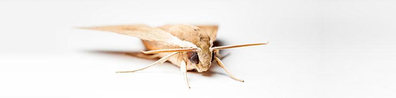 עמוד-חרקי-מחסן-ועשים